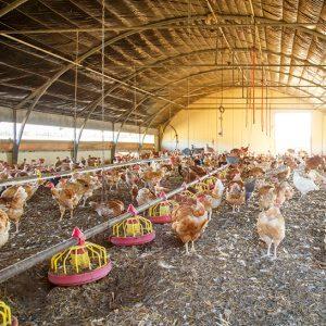 Livestock Shelters